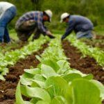 ΠΡΟΔΗΜΟΣΙΕΥΣΗ:  Δράσης 4.1.1 «Υλοποίηση επενδύσεων που συμβάλλουν στην ανταγωνιστικότητα της εκμετάλλευσης»