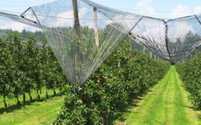 Επενδύσεις σε προληπτικά μέτρα για την προστασία καλλιεργειών